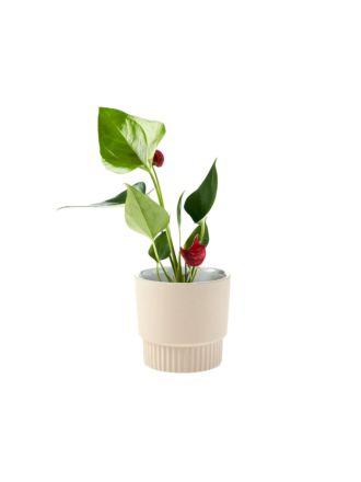 Rivera Taupe Planter Pot 10cm