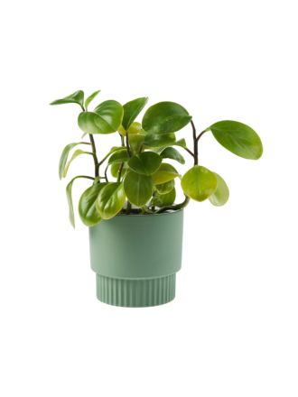 Rivera Green Planter Pot 13cm
