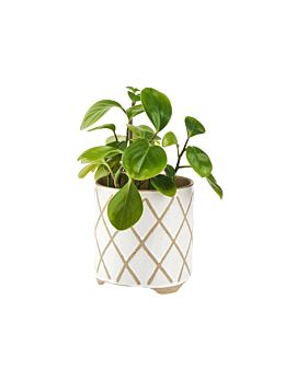 Estrada White Planter Pot 12cm