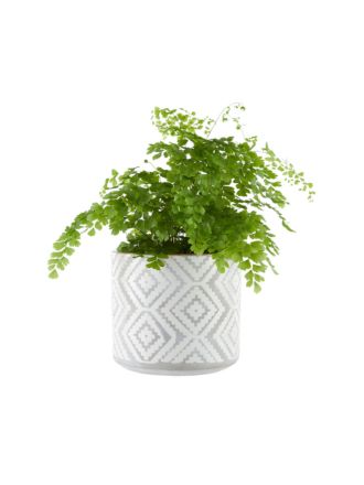 Danica Planter Pot 16.5cm