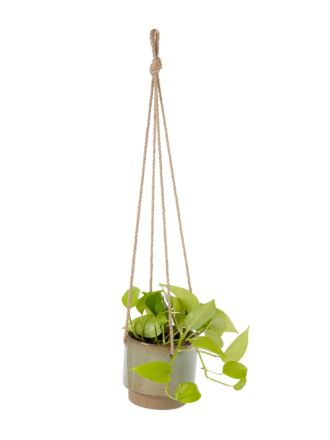 Paco Green Hanging Planter 14.5cm