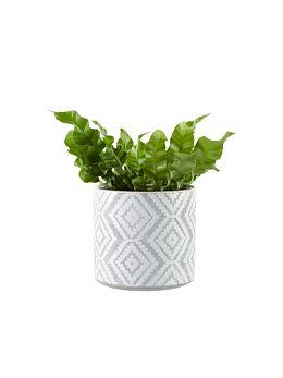 Danica Planter Pot 13cm